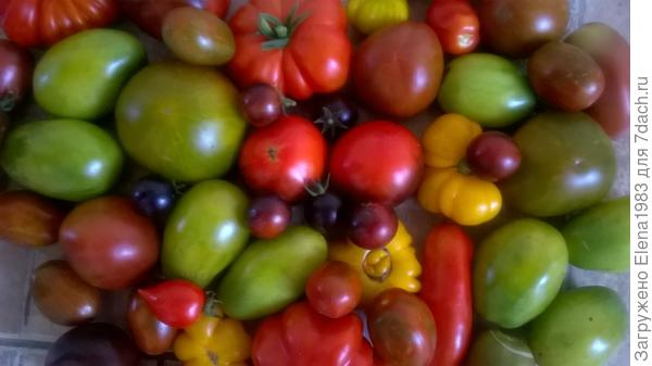 помидорчики на любой вкус и цвет