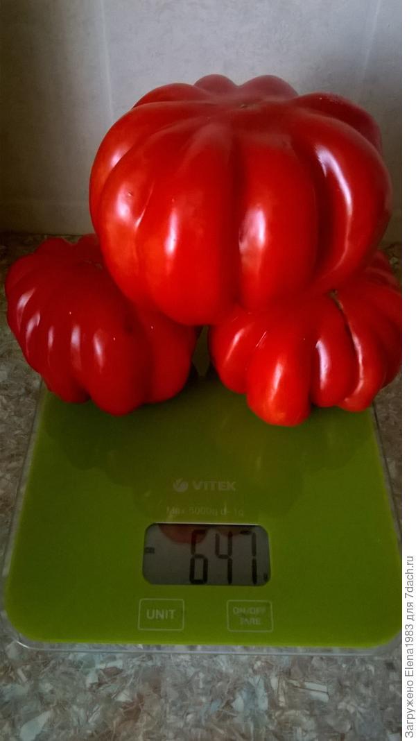 томат Лотарингская красавица