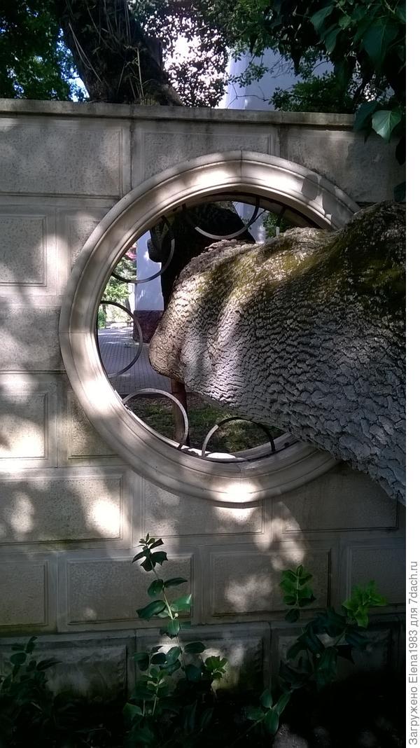 дерево как бы вросло в забор
