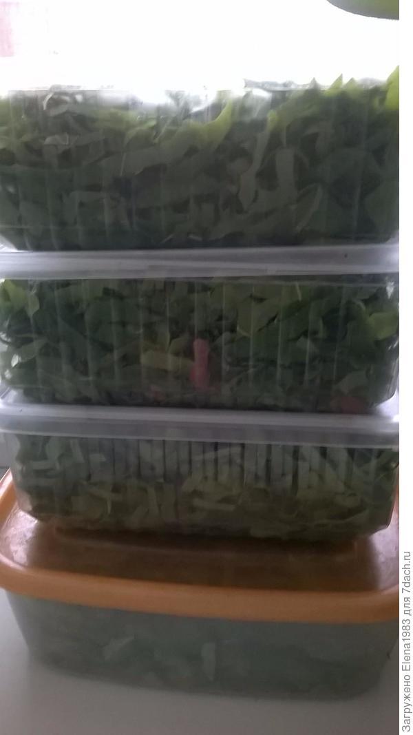 листики на ферментации