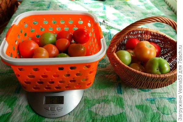 На весах поспевшие плоды с двух остальных кустов в теплице, в сравнении с плодами 1-го куста, 09-08-2017