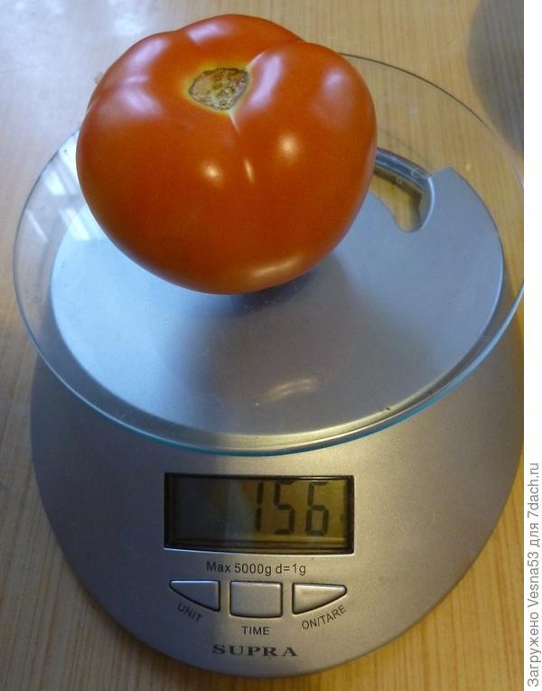 Самый крупный томат с Любаши F1, 13 августа 2017г.