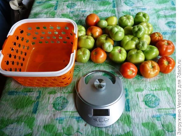 8 сентября, томаты перед взвешиванием.