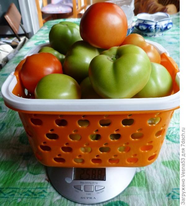 8 сентября 17г., сбор №5, томаты на весах.