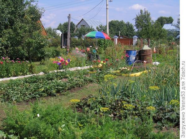 Садовый участок, лето 2004г