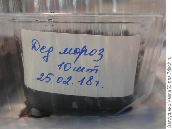 Контейнер с посевами, помеченный наименованием сорта и датой посева