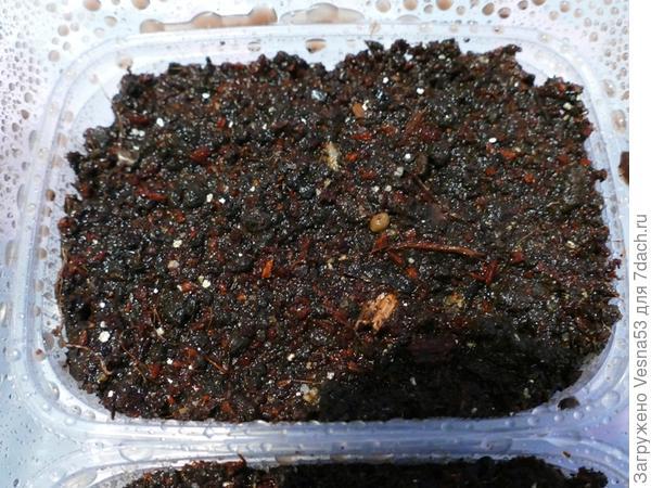 Посев. Семена засыпаны грунтом слоем 1 см и увлажнены из опрыскивателя.