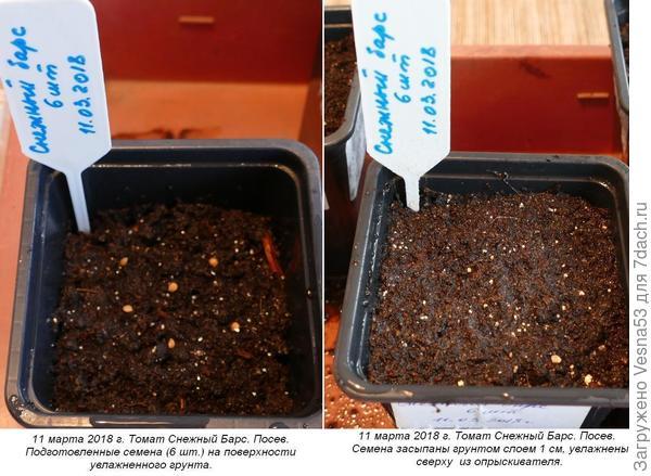 11 марта 2018 г. Томат Снежный Барс. Посев семян на рассаду, 6 шт.