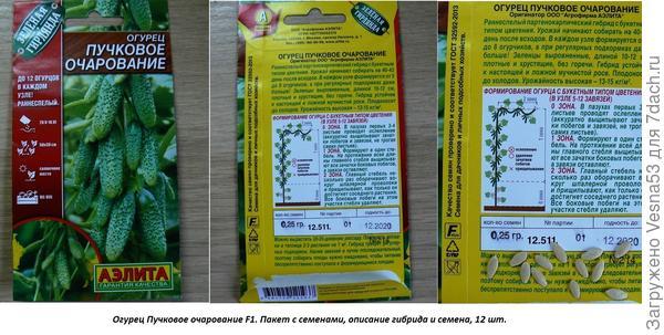 13 мая. Огурец Пучковое очарование, пакет с семенами.