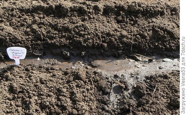 13 мая. Огурец Ребятки F1 с грядки, посев семян.
