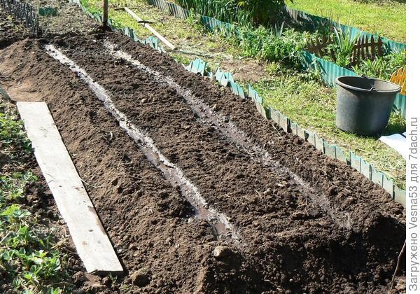 13 мая. Подготовленная для посева огурцов грядка.