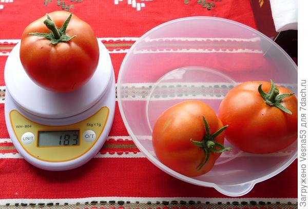 8 июля. Самый крупный плод томата Лирика F1 с куста №2 на весах.