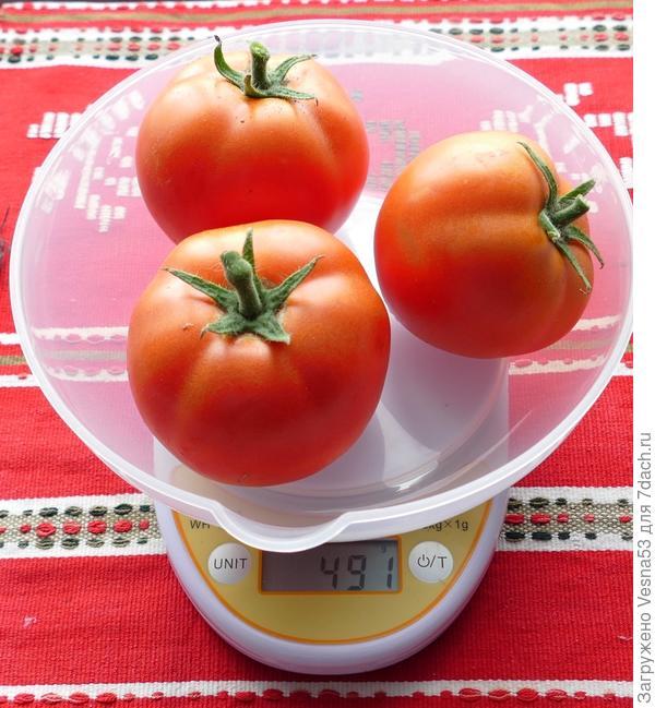 8 июля. Томат Лирика F1, плоды с куста №2 на весах.