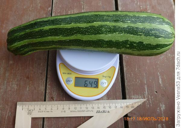 Плод сбора 18 июля на весах.