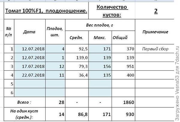 Учет плодоношения томата 100% F1  за первые две недели с 12 по 22 июля.