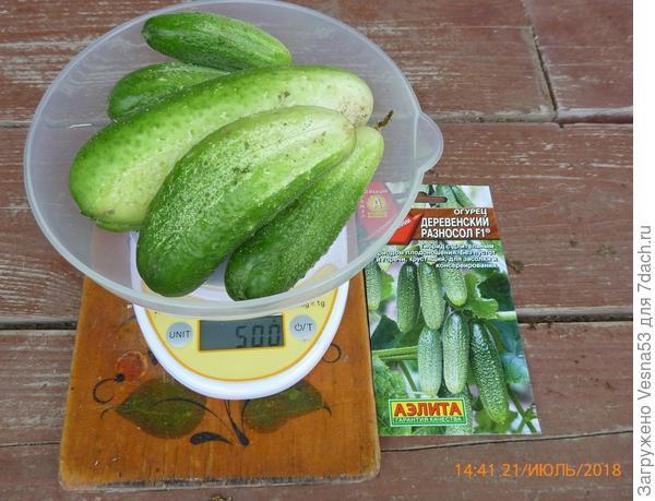 Третий сбор плодов на весах.