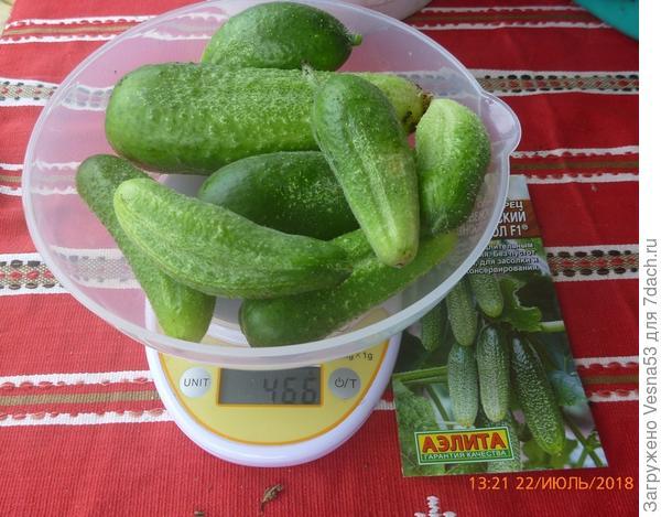 Четвертый сбор плодов на весах.