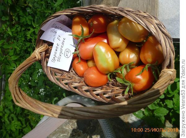 Сбор плодов с трёх кустов за 25 июля.