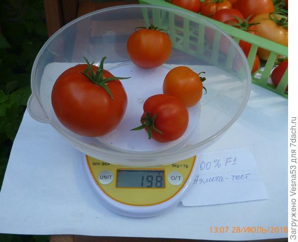 28 июля, томат 100% F1,  плоды на весах.