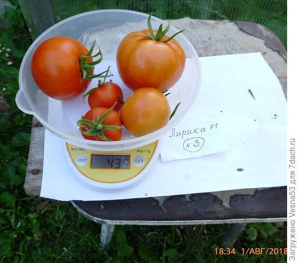 Куст №3, плоды на весах.