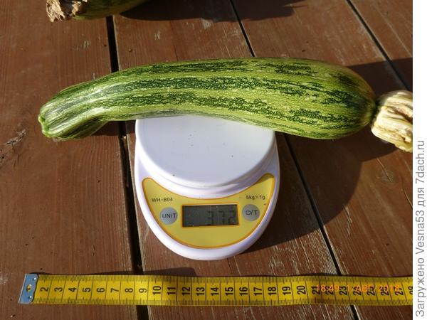 Тигренок, 1-й плод на весах, 1 августа.