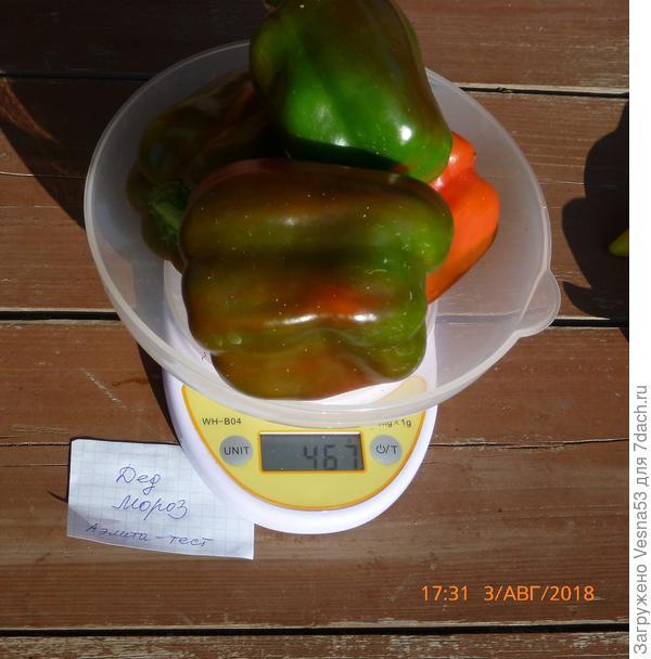 Плоды сбора 3 августа на весах.