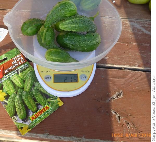 Плоды сбора 8 августа на весах.