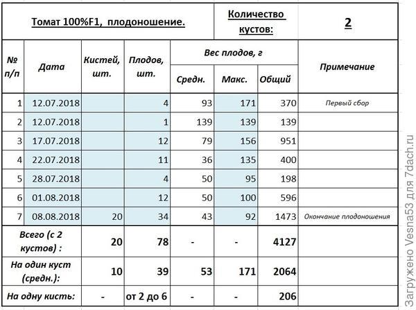 Итоги плодоношения томата 100% F1. 8 августа.