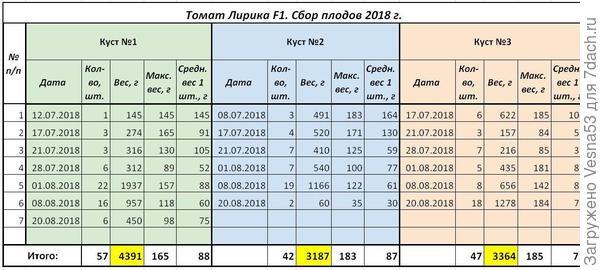 Томат Лирика F1, учет плодоношения по состоянию на 20 августа.