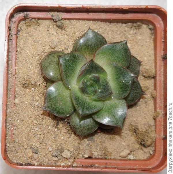 Переделка домика для кактусов и суккулентов