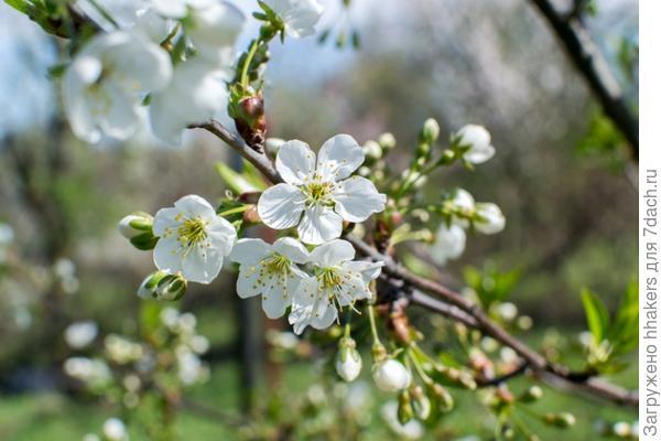 Вокруг весна!