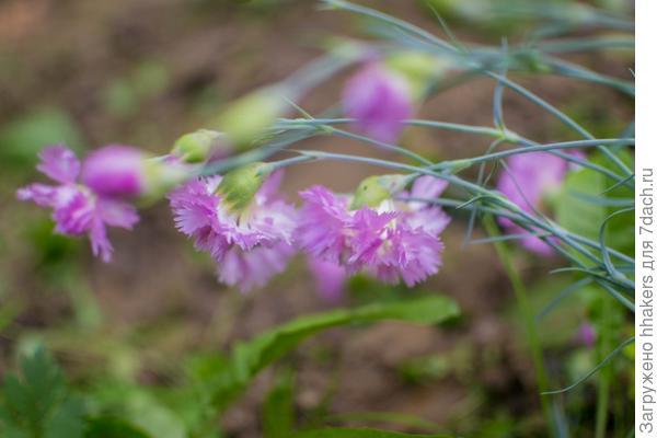 Вот такие цветочки