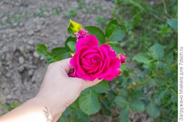 Первый цветочек