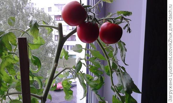 Балконное чудо в Бобруйске !!!