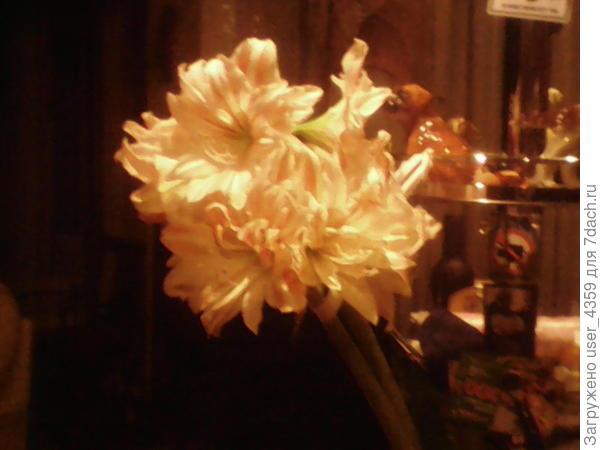 к 8 марта цветет