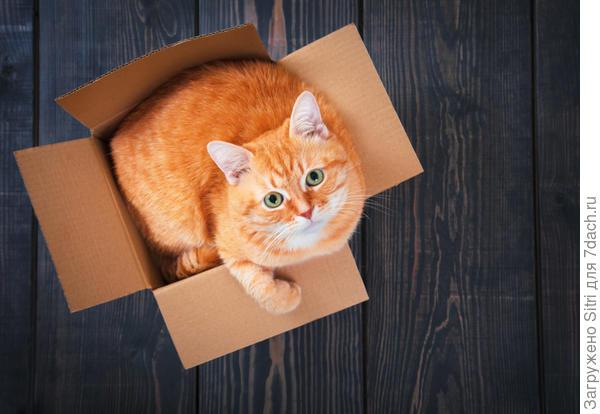 Кошки очень любят коробки