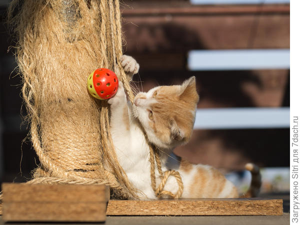 Такая игрушка может занять кошку на долгое время
