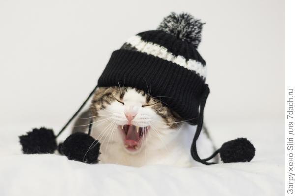Одежку в подарок не каждый кот оценит по достоинству