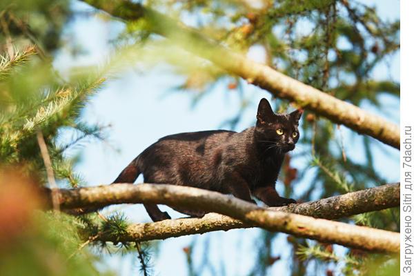 Кошки — хищные животные