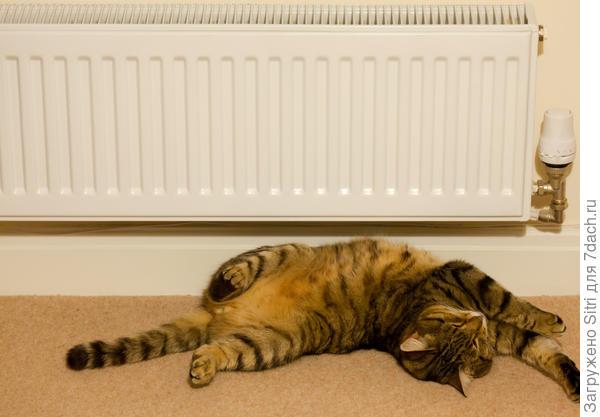 Кошки предпочитают теплые места