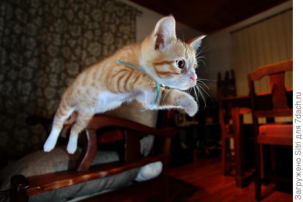 Кошке нужно прыгать, лазать, играть и охотиться