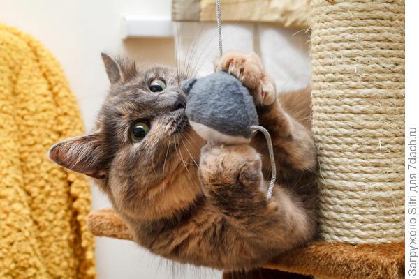 Охота на игрушечную мышку