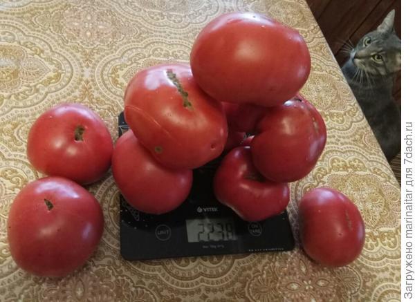 3+2+1 - шесть помидоров на весах