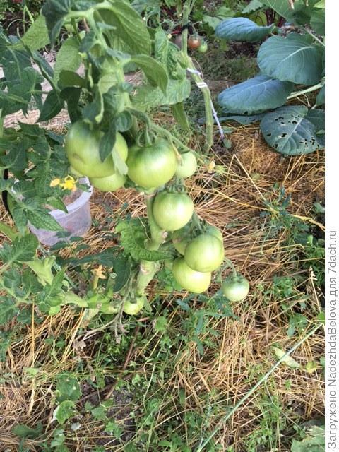 Завязавшиеся плоды