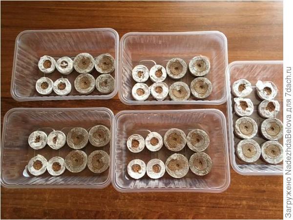 Контейнеры с таблетками Джиффи и таблетками с кокосовым торфом