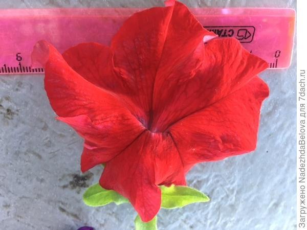 цветочек красной
