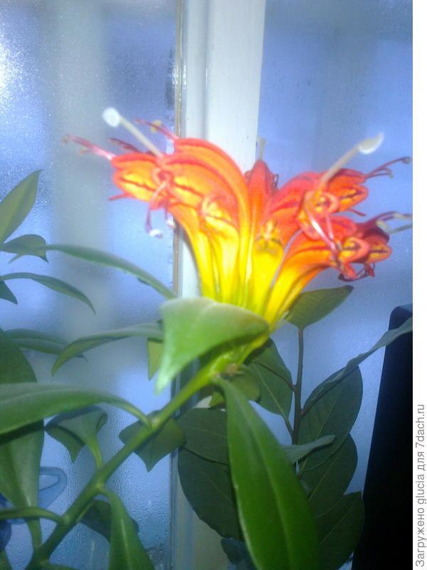 Аленький цветочек!