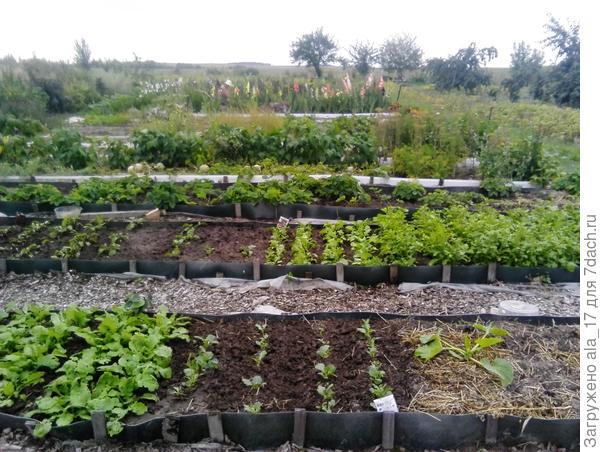 Для того, чтобы максимально сократить работы в огороде, разбили стационарные грядки, обив их разным подручным материалом.