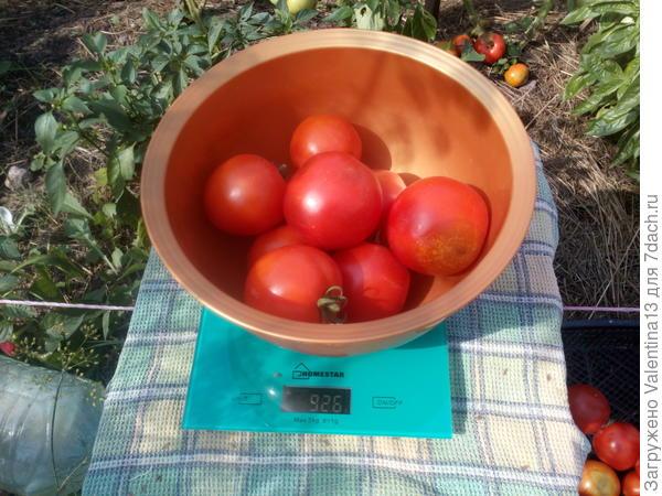 Вес помидоры N2