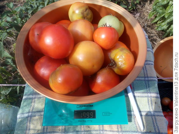 Вес помидоры N3
